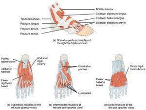 Foot Braces for Pain Relief