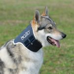Best Neck Braces For Dogs 2019 – Reviews, Specs, Price & Buyer's Guide