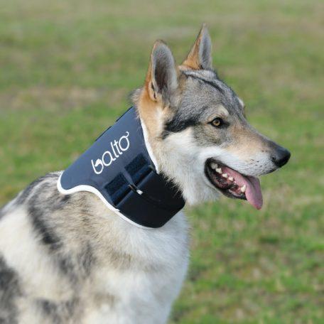 balto neck braces for dogs