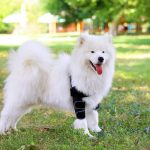 Best Shoulder Braces For Dogs 2020 - Reviews, Specs & Buyer's Guide