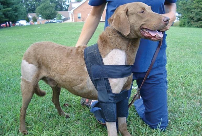shoulder brace for dogs